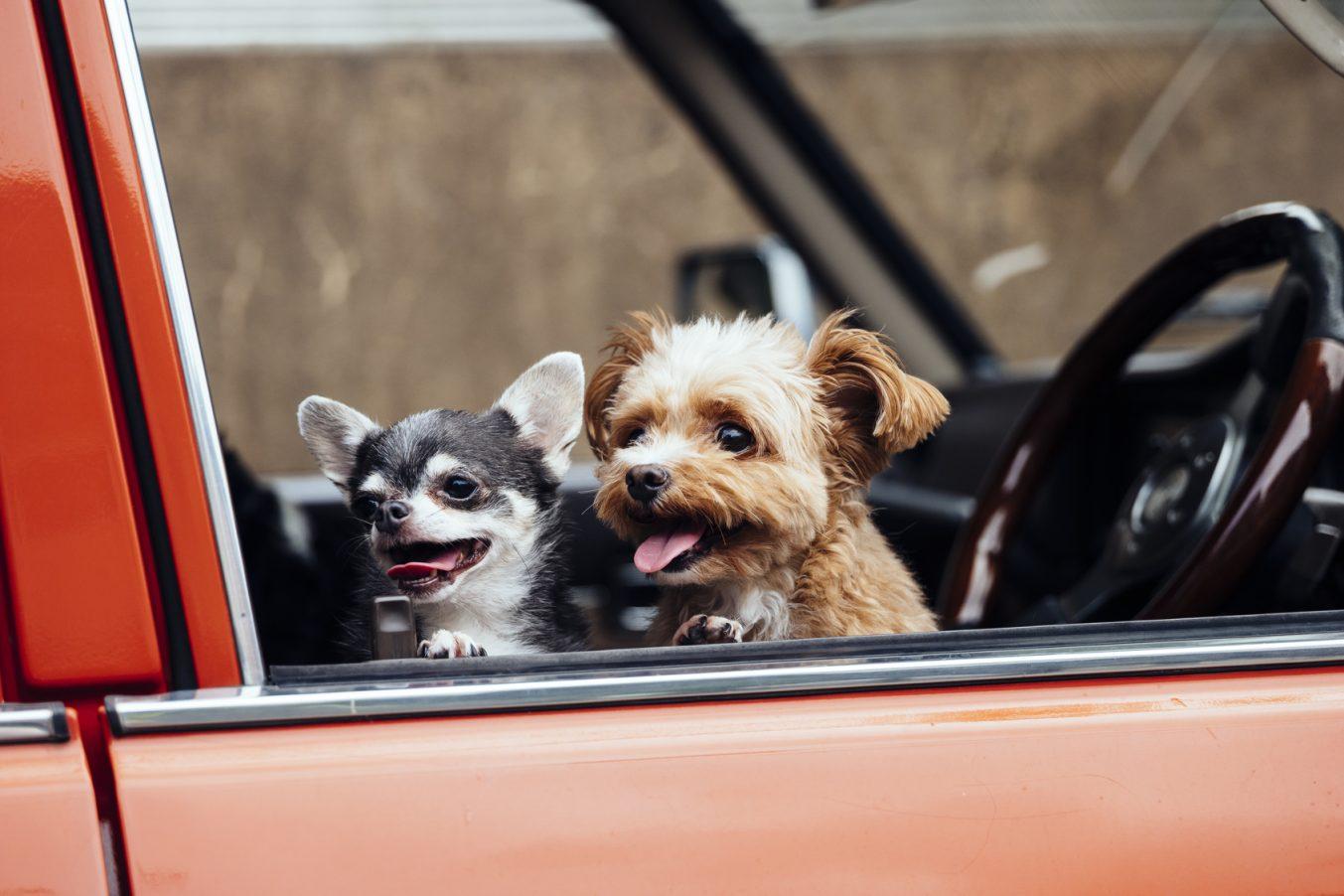 イヌとドライブを楽しむための基礎知識と東京付近のペット向けスポット